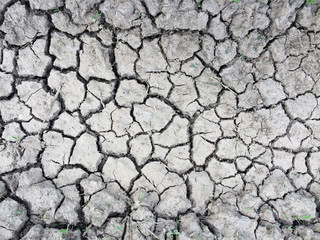 Dry Cracking Earth