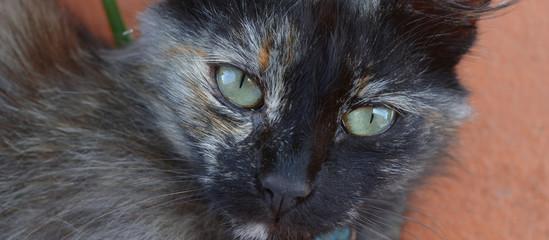 Primo piano di un gatto