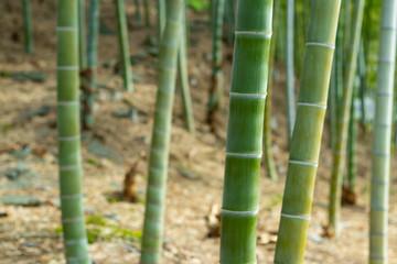 涼しげな竹林