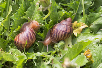hand snails of walk in the grass
