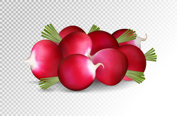 Grope of photo realistic radishes on a transparent background. Vector illustration.