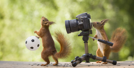red squirrels with a camera and an ball