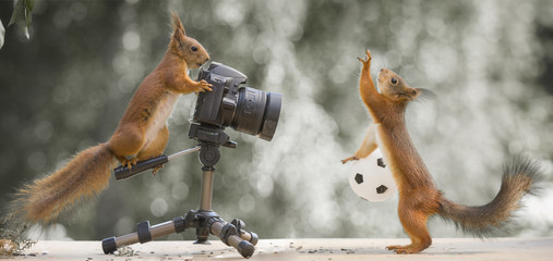 red squirrels with an camera and a ball