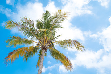 Beautiful coco palms in summer time. concept travel, holiday and vacation.
