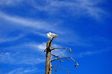 Two seagullsis  sitting on the branches of dry tree.