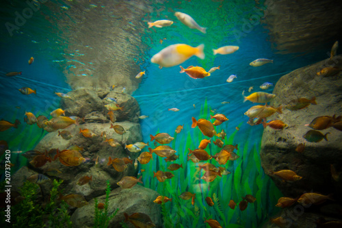 A marine aquarium with fishes and seaweed
