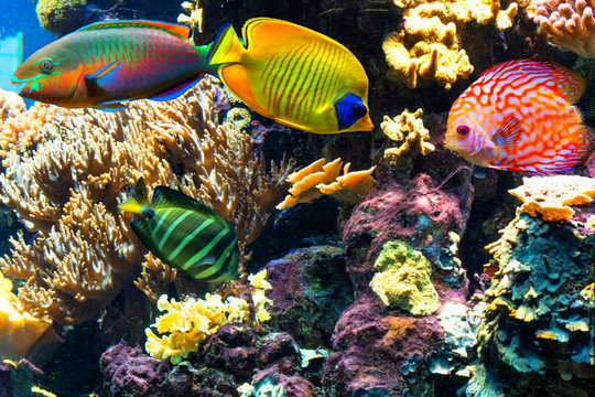 Colorful beautiful fish and underwater landscapes in the sea.