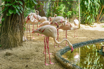 Meny greater flamingo live in a forest model.