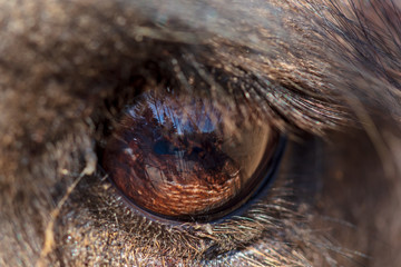 The eye of a camel