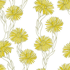 Coltsfoot. Seamless pattern with hand-drawn flowers on a white background.  Vector illustration.