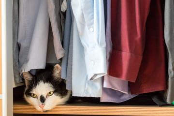 Katze im Kleiderschrank
