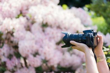 blühende Pflanzen fotografieren
