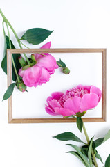 Pink peony flower in frame Flat lay Nature concept on white background with copy space for greeting message creative layout. Mother's Day and spring background concept.