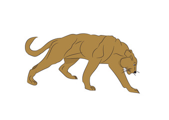 lioness color, vector