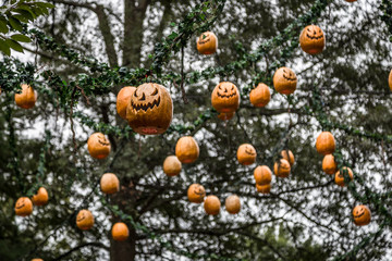 Hanging Pumpkins in Trees