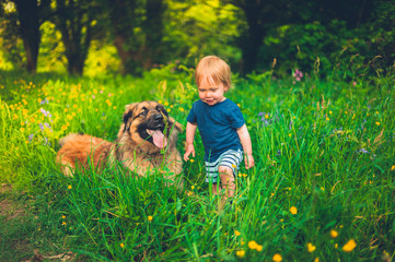 Little boy with dog in meadow at sunset