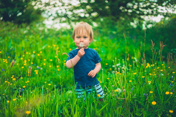 Little boy in meadow with dandelion