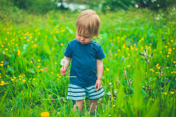 Little boy picking dandelions in a meadow
