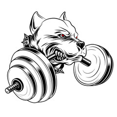 Black and white image of a pit bull with a barbell