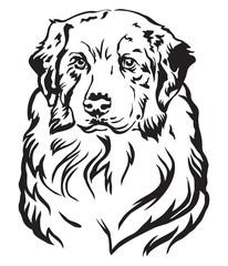 Decorative portrait of Australian shepherd vector illustration