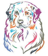 Colorful decorative portrait of Australian shepherd vector illustration