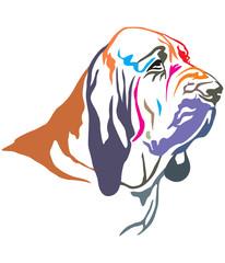 Colorful decorative portrait of Bloodhound vector illustration