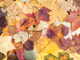 autumn background from various variegated leaves