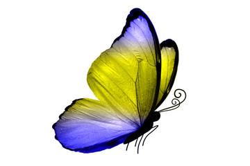 Бабочка с сине-зелёными крыльями, изолирована на белом