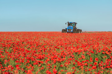 Blue tractor in the red poppies field.