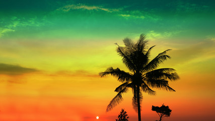 sunset colorful sky and silhouette coconut tree
