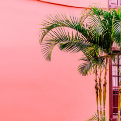 Palm on a pink. Tropical mood. Plant on pink concept