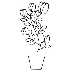potted plant flowers tulip decoration vector illustration
