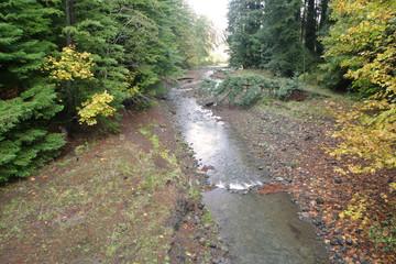 South Fork Eel River, Robert Madsen Memorial Bridge, Humboldt Redwoods State Park, California, USA