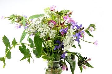 Heilpflanzen, natürlich heilen, Naturheilkunde