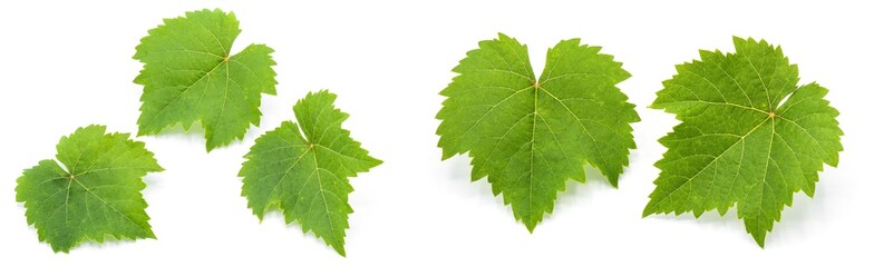 collection of green grape leaves isolated on white background Fototapete