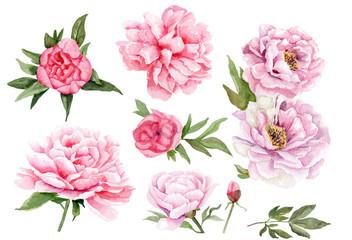 watercolor drawings of peonies. set of flowers and leaves