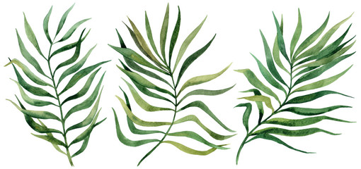 Tropical leaves set.