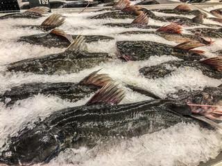 Frozen sea bass in maket Thailand