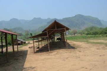 village elephant