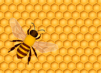 Honeycomb seamless background with one bee. Vector illustration.