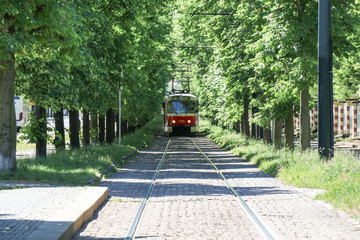 train on railroad track amidst trees