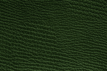 Green textured background. / Leather surface close up for wallpaper or backdrop