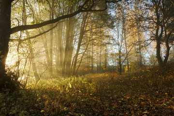 Morning light in the fog / Autumn sunrise in north Poland, pomerania province