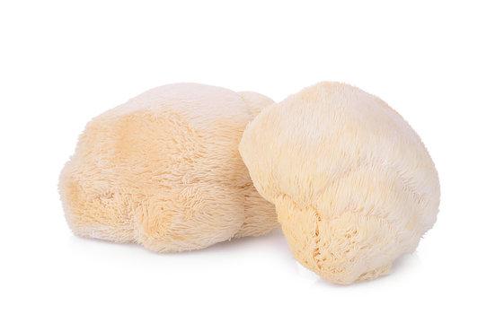 mokey head mushroom , lion mane or yamabushitake isolated on white background