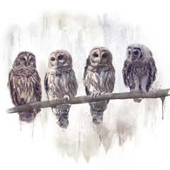 Barred Owls watercolor