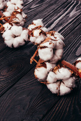 Beautiful cotton on a wooden background