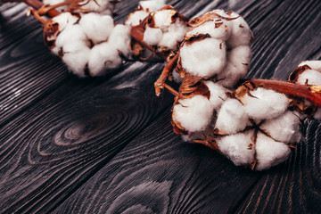 Cotton natural on a wooden table
