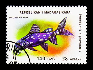 Upside-down Catfish (Synodontis nigriventris), Aquarium fish serie, circa 1994