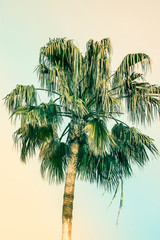 Palm Tree on Toned Pink and Turquoise Blue Duotone Sky Background. Trendy Pastel Colors. Surrealistic Vintage Style. Copy Space for Text. Tropical Seaside Ocean Beach Vacation. Hip Funky Atmosphere