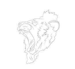 lion portrait, lines, vector